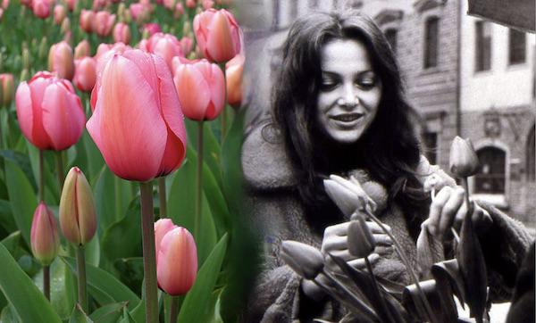 http://irenajarocka.pl/webdocs/image/2021/KG/Irena-z-tulipanami-na-rynku-1973-1.jpeg